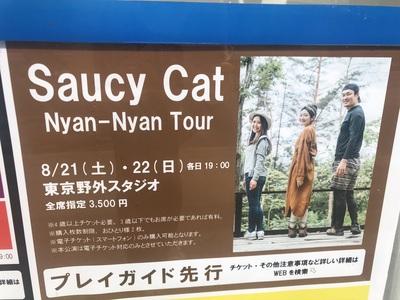 saucycat_3.jpg
