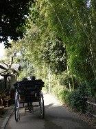 3竹林.jpg